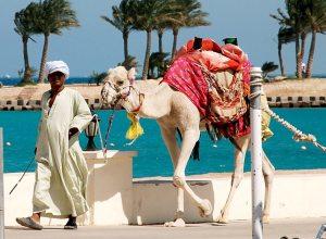 Варто вибирати відпочинок в Єгипті влітку?